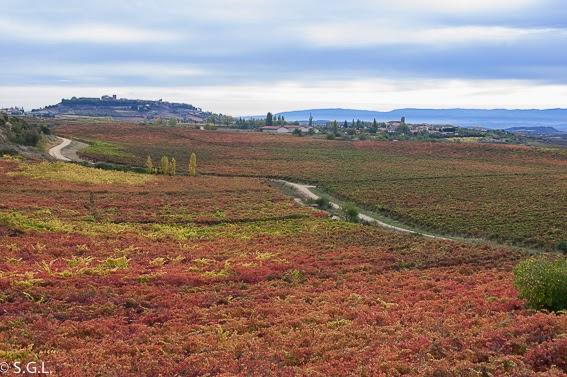 Viñas de La Rioja alavesa. De excursion a Laguardia
