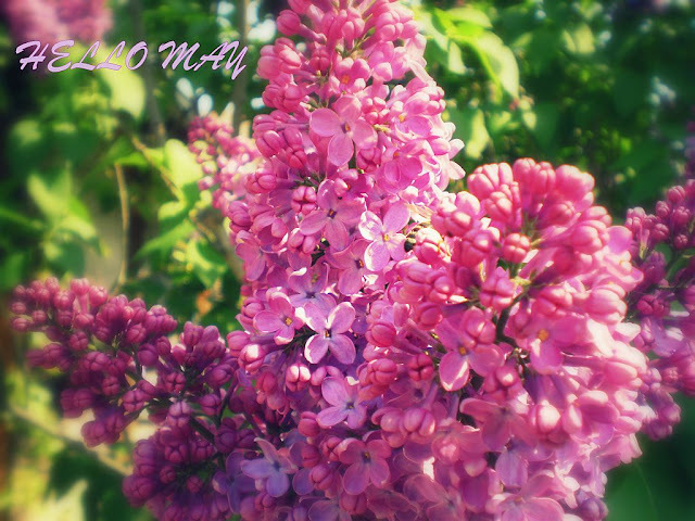 Hello May card with amazing lilacs