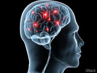 Scientists Discover that the Brain Cleans Itself