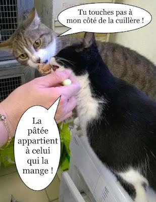 Une cuillère de pâtée pour deux chats.