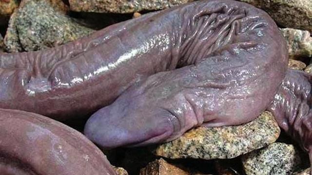 eroticke privaty velky penis