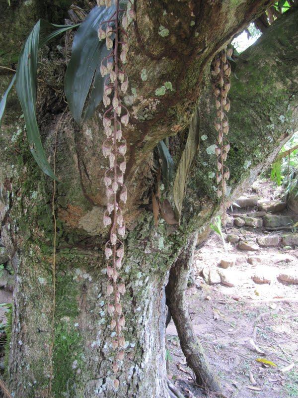 Visitando wakanki el reino de las orqu deas - Lista nombre arbustos ...