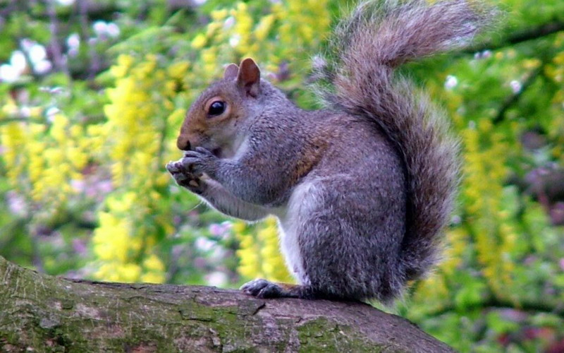 Frugal Garden And Outdoor Living With Anna Squirrels In The Garden And Ways To Deter Them