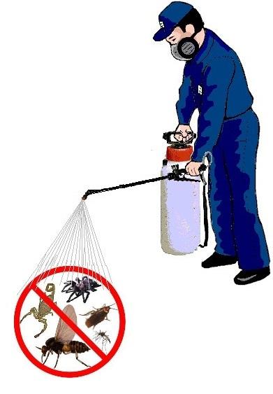 Fumigaci n contra insectos y control de plagas cont ctenos for Control de plagas badajoz