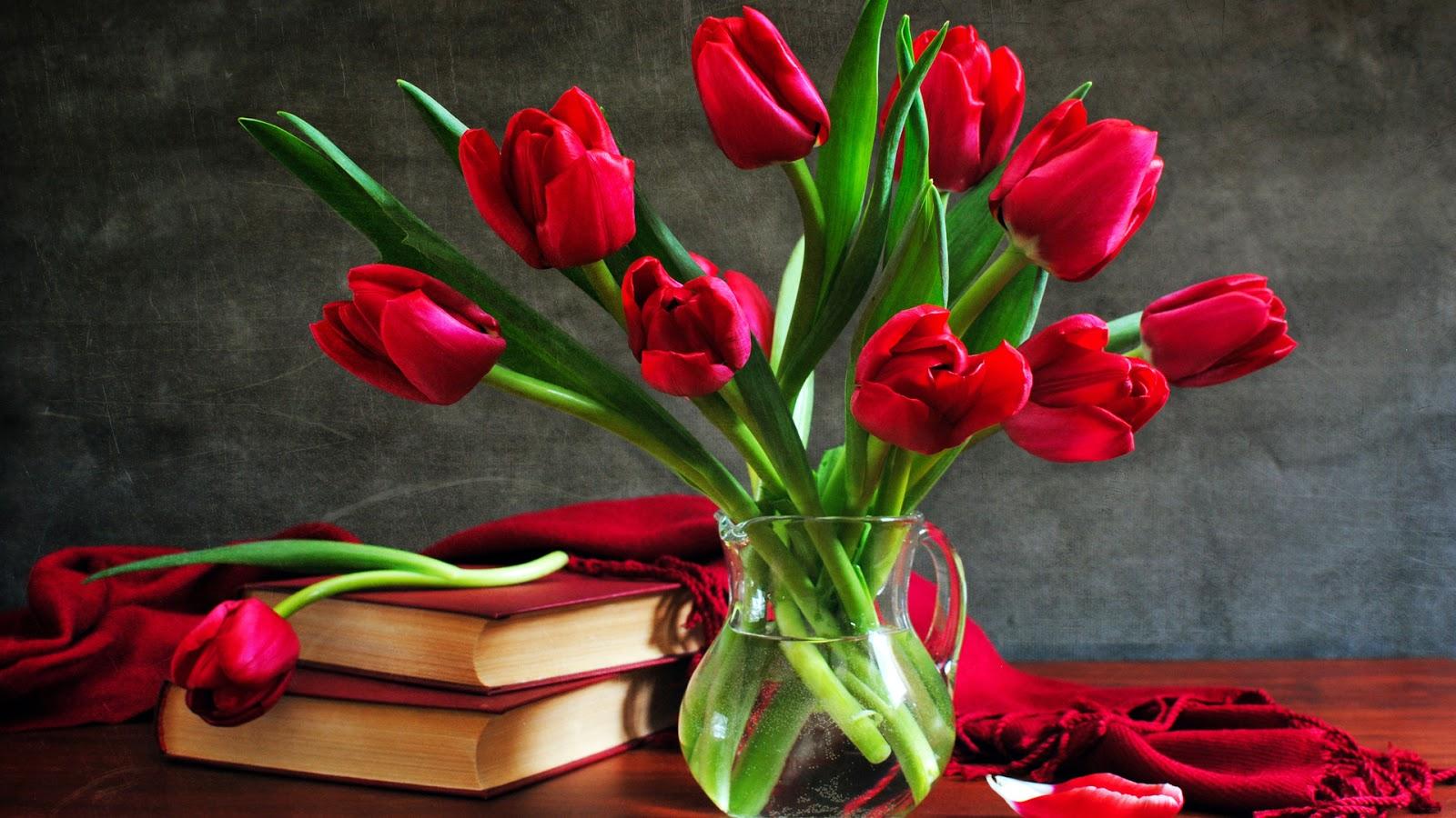 Red Roses Stills