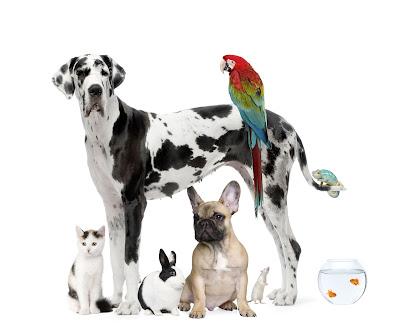 Collage de fotos de mascotas como perros, gatos, etc.