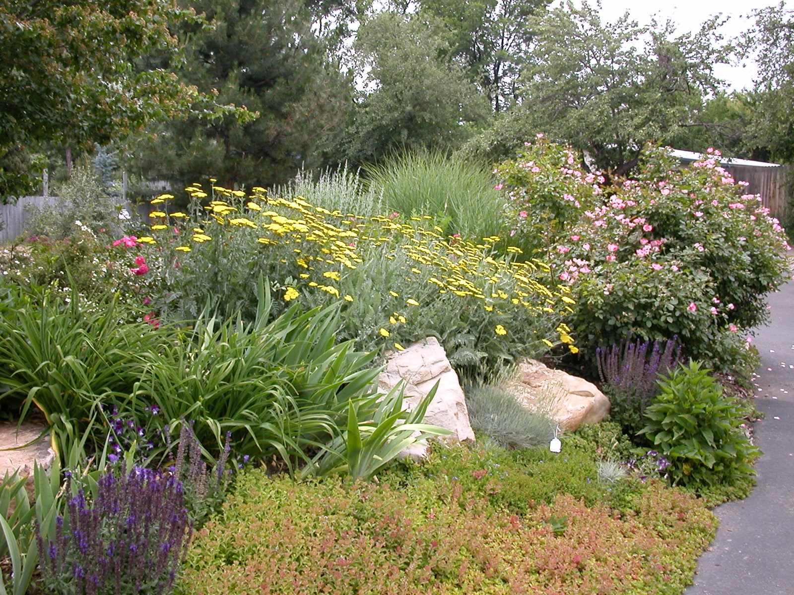 Goss-Grove Neighborhood Blog: Conservation Center Xeriscape Classes