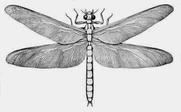 Meganeura - Massive Dragonfly