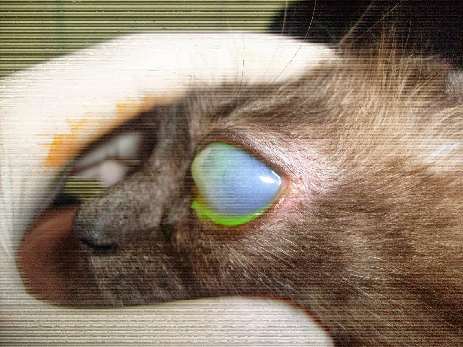 kitten has blood in diarrhea