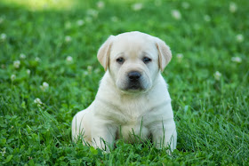 Nicki's pup 2013