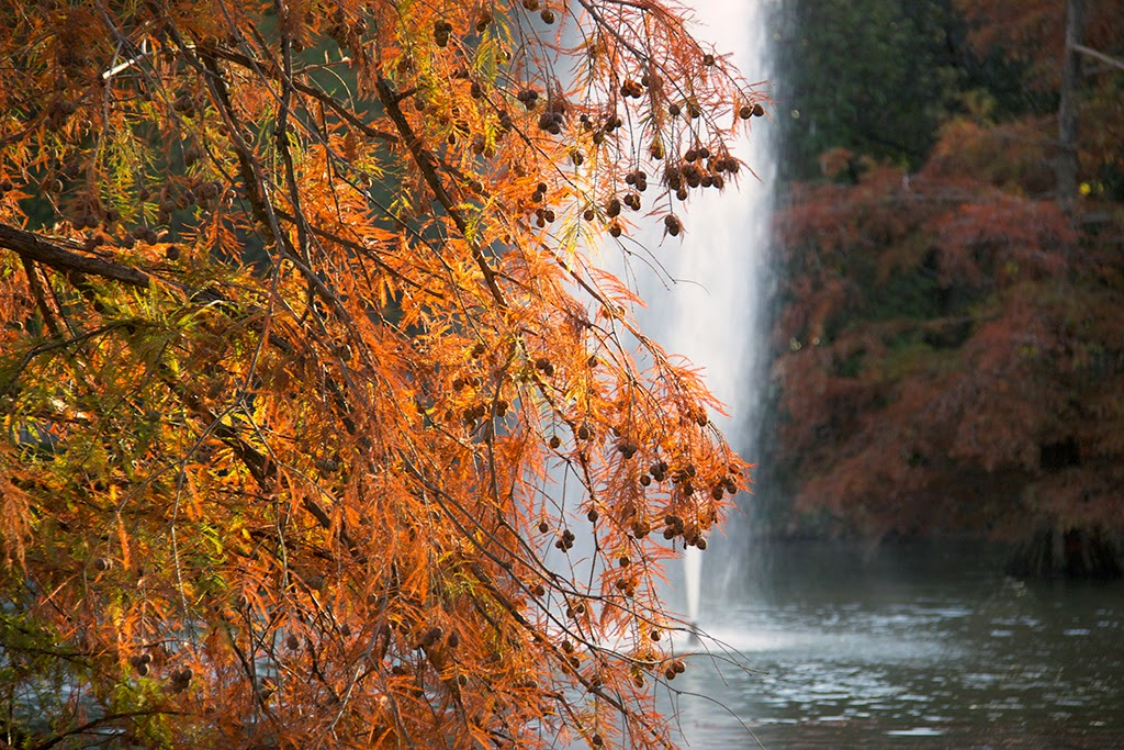 Fotografía otoño Madrid