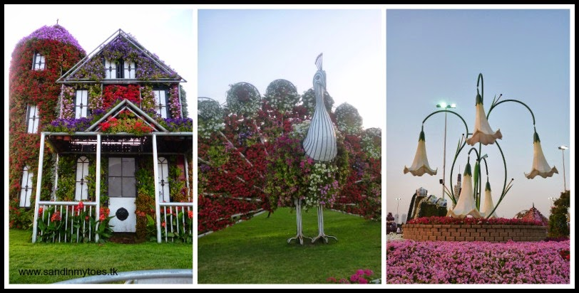 Dubai Miracle Garden house and peacock