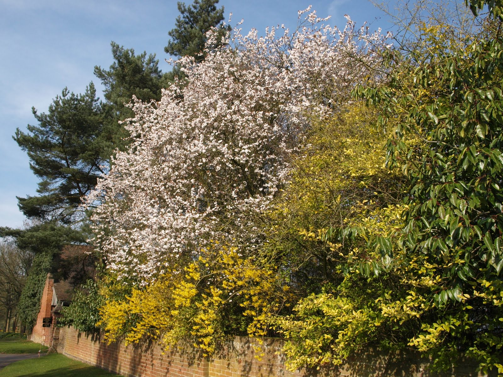 Ragged Robin\'s Nature Notes: Spring at Packwood House Gardens