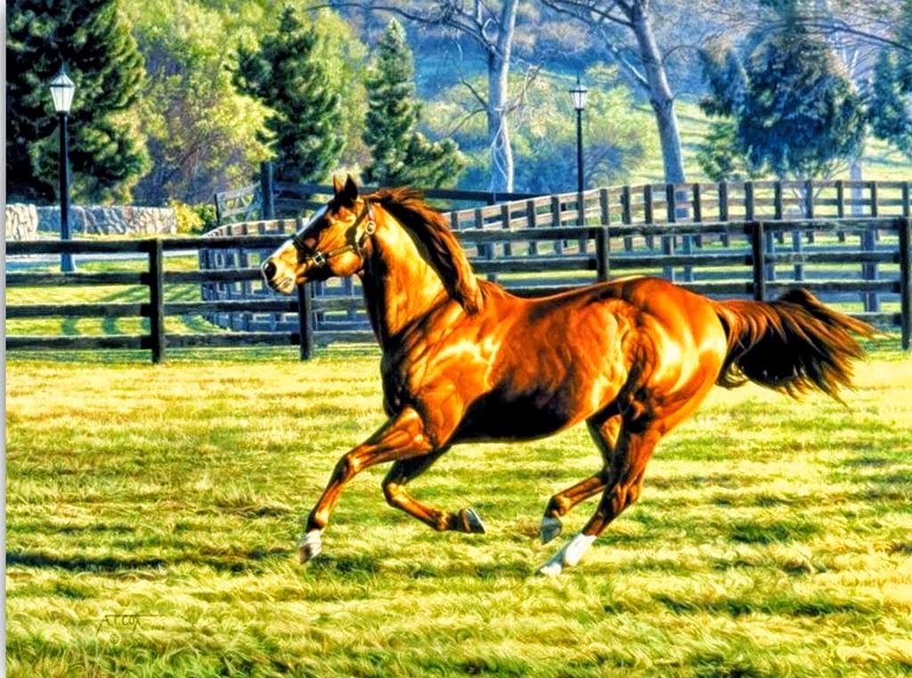 cuadros-de-caballos-en-movimiento