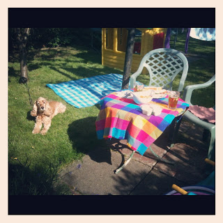 picnic, dog,
