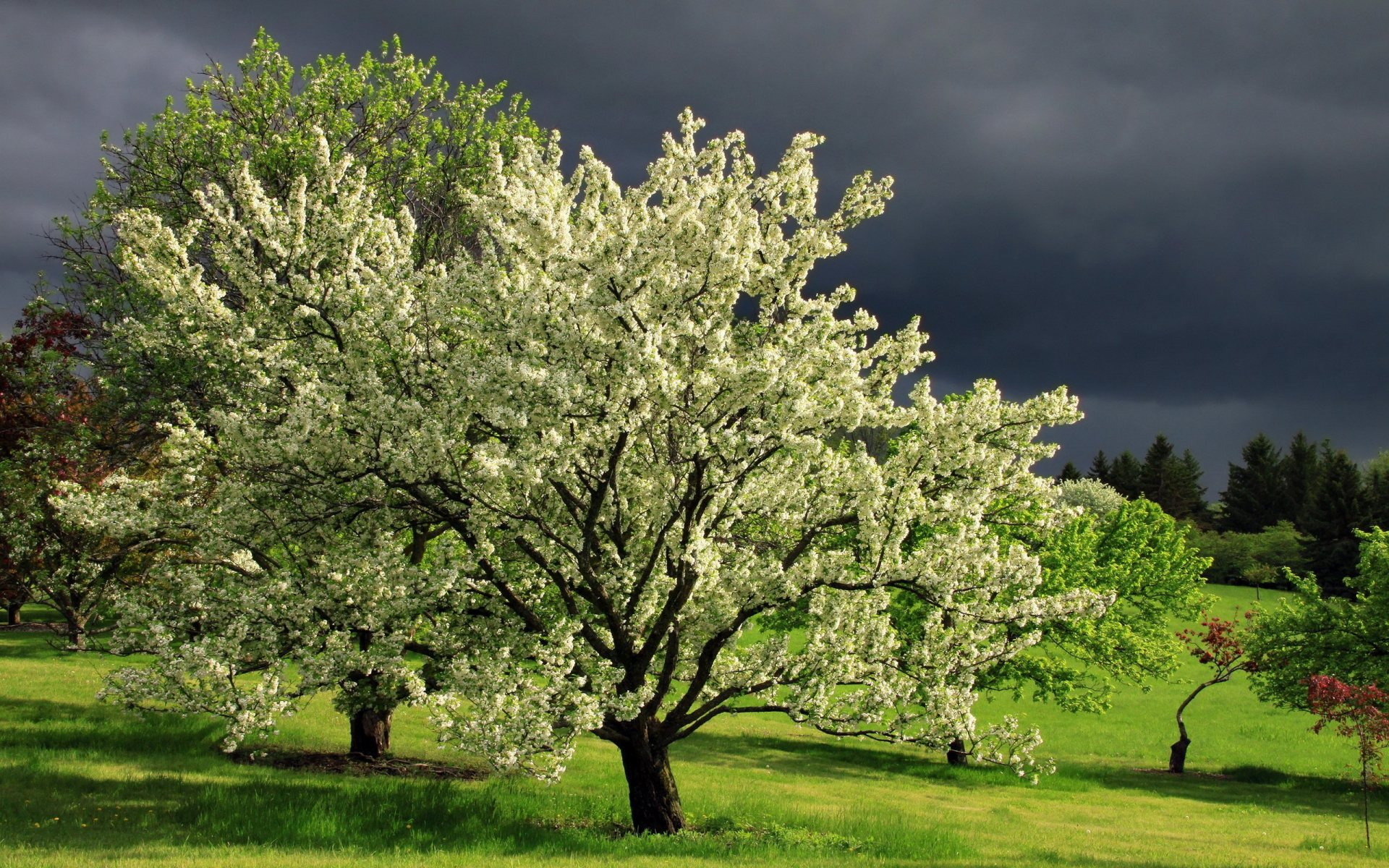 spring trees background - photo #15