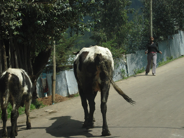дороги Эфиопии