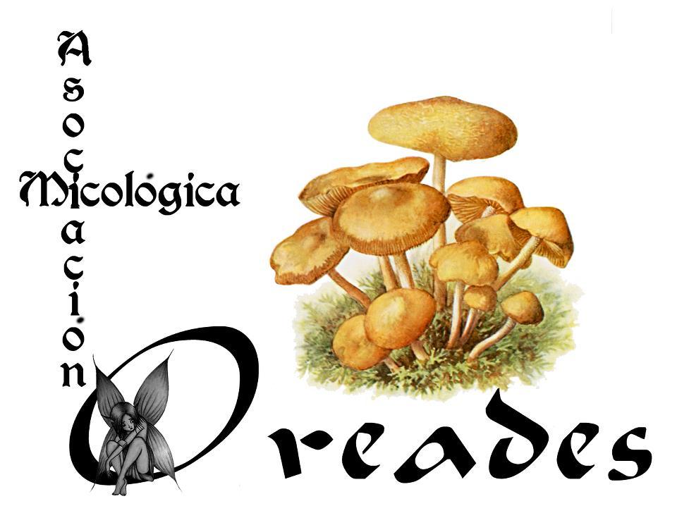 """Asociación Micológica """"Oreades"""""""