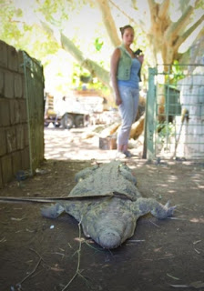 Captured Croc - Rakwena Crocodile Farm