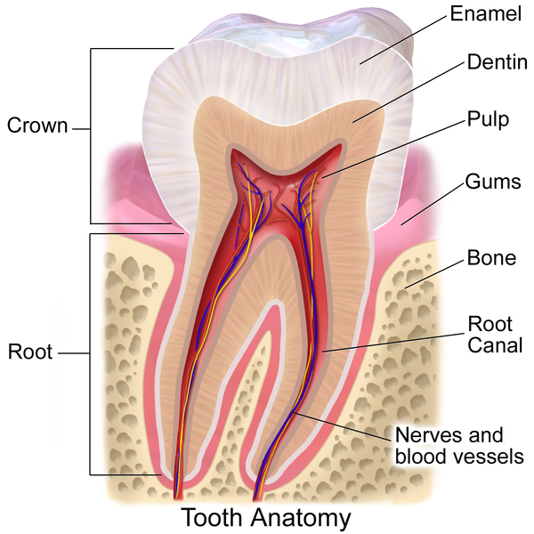 obat sakit gigi