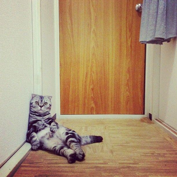 viral cat videos
