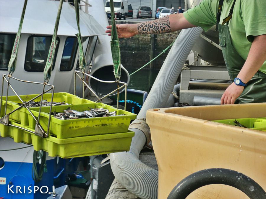 pescador cogiendo cajas de pescado en hondarribia