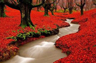 A brook in Portugal