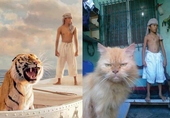 #cosplay #cat #meme #poor #tiger Life of pi, Cosplay