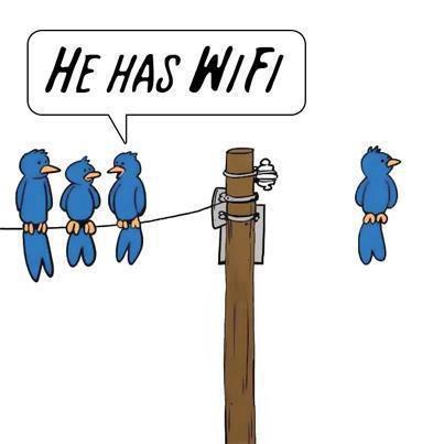 funny picture, wifi, birds, cartoon