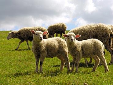 ¿necesito 100 animales herbivoros? Yahoo Respuestas - animales herbívoros imagenes