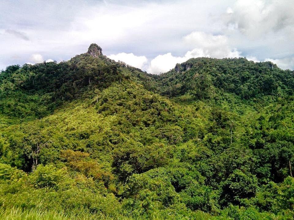 Hutan Renah Pametik