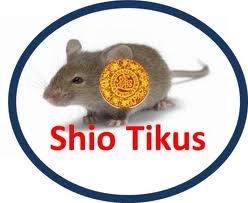 shio tikus Ramalan Shio Tikus di Tahun 2013