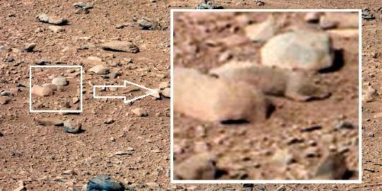 Curiosity temukan 'tikus' di planet Mars