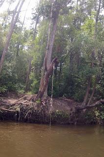 Milton FL river trips