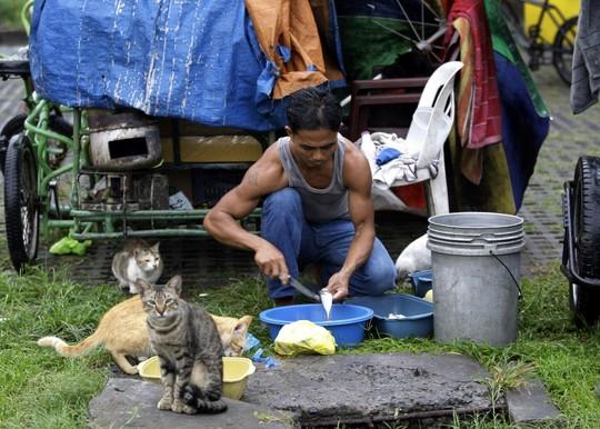 Manila cats