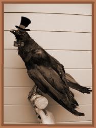 Grandma's pet raven