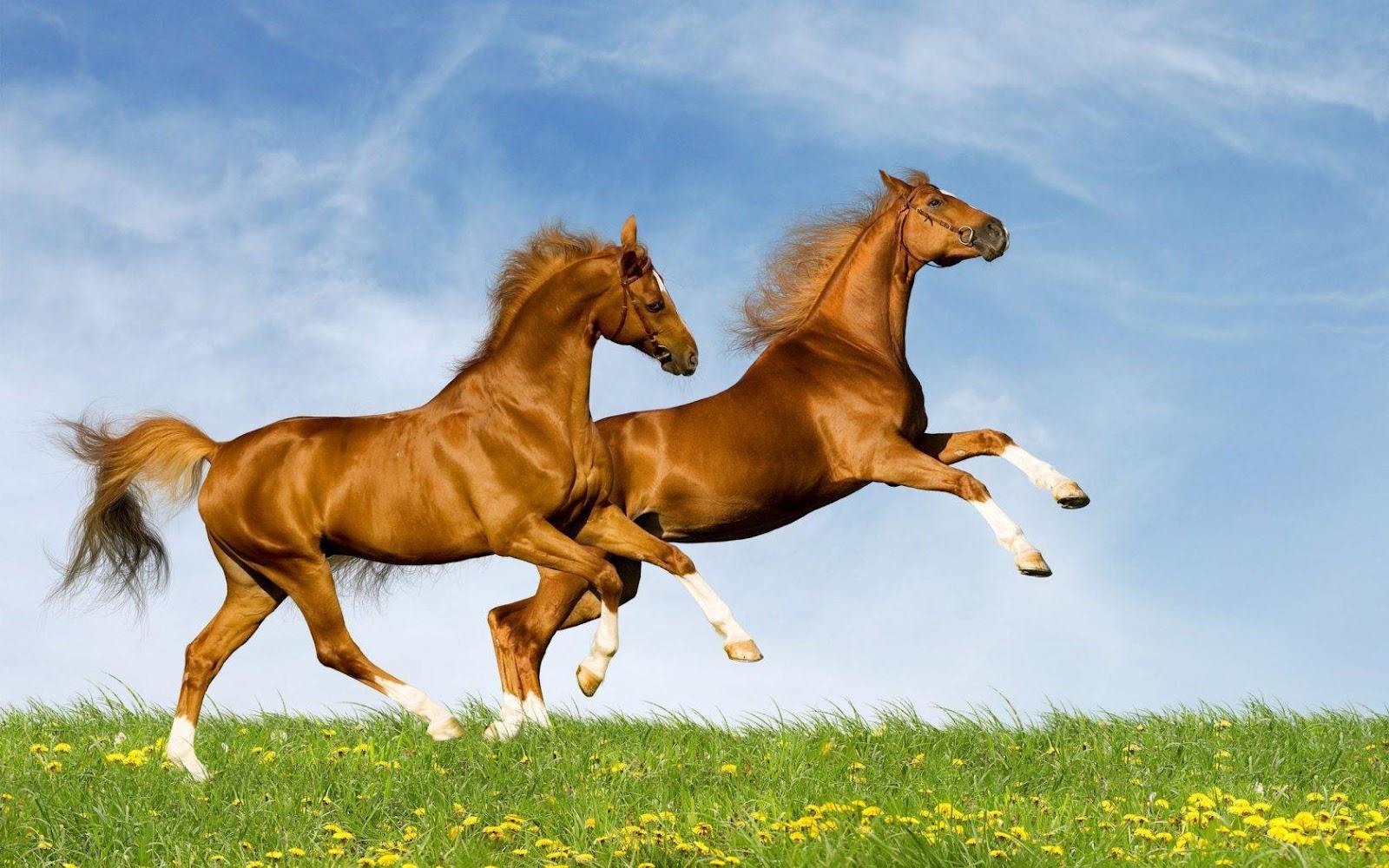 http://4.bp.blogspot.com/--ZLp383msN8/UCZxM69feOI/AAAAAAAAE70/uYRf2iw-kSU/s1600/two-horses-1680x1050.jpg