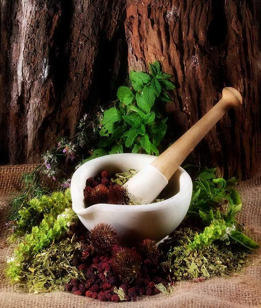 Ayurveda herbal