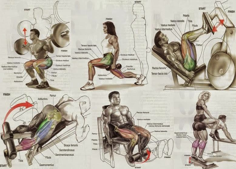 Squat your way to weight gain all bodybuilding