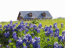 Bluebonnet Field of Dreams