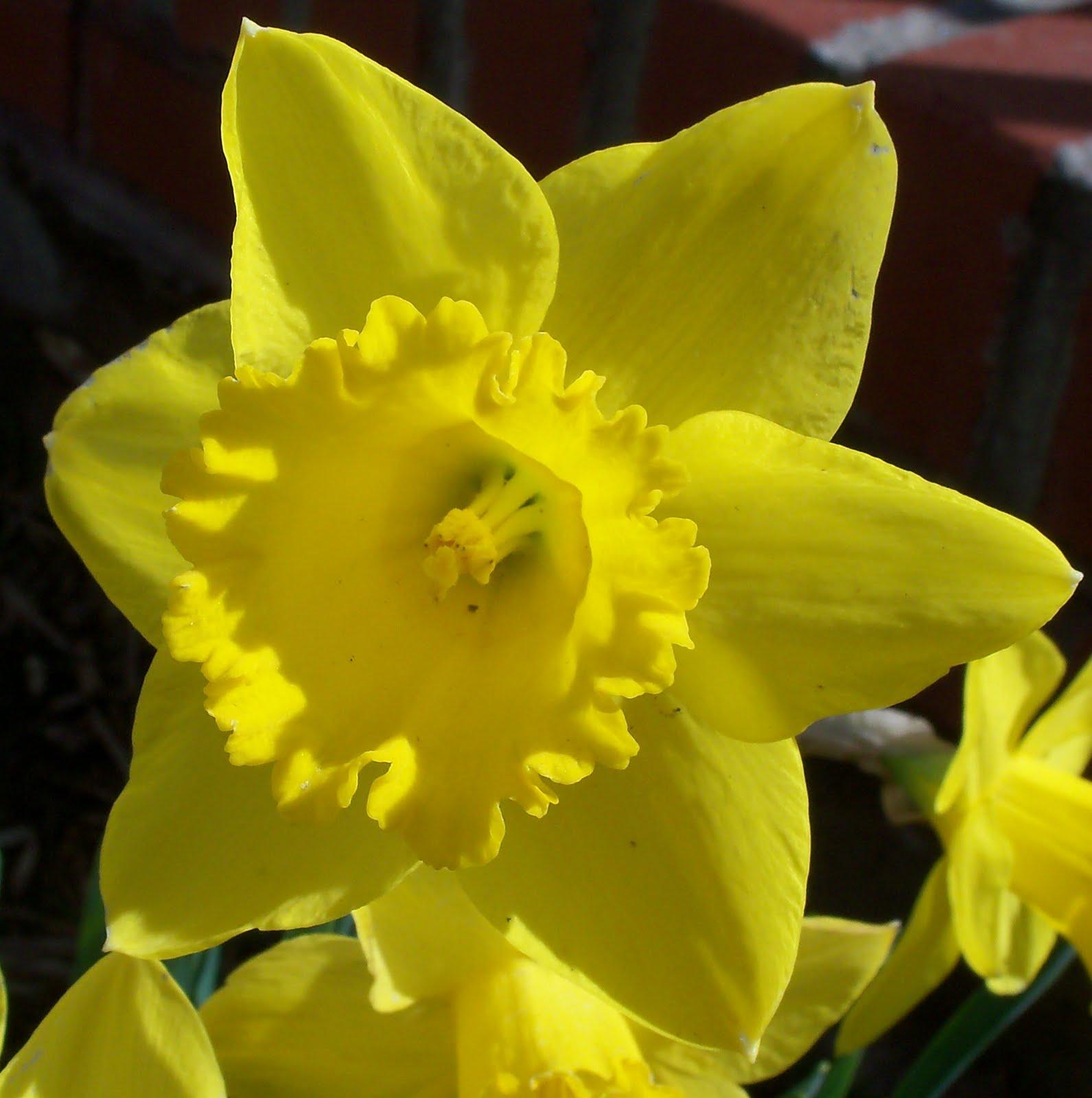 kim 39 s county line spring has sprung