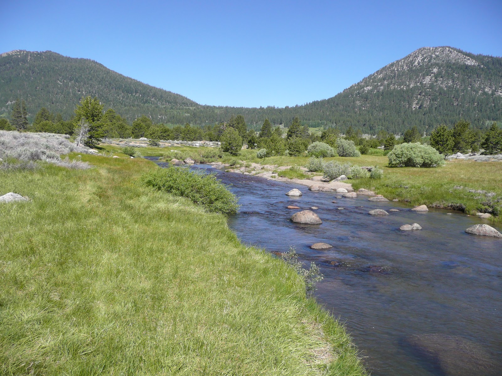 Northern california trout west fork of the carson river for The carson