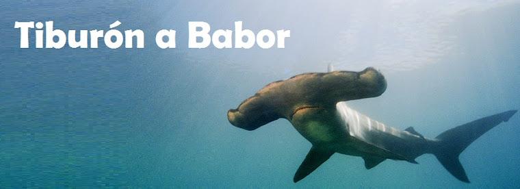 Tiburón a babor