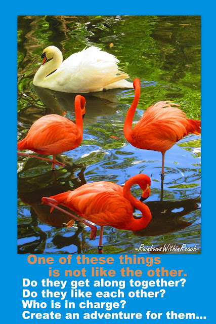 photo writing prompt, flamingos, elementary writing, creative writing