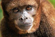 Una historia de micos