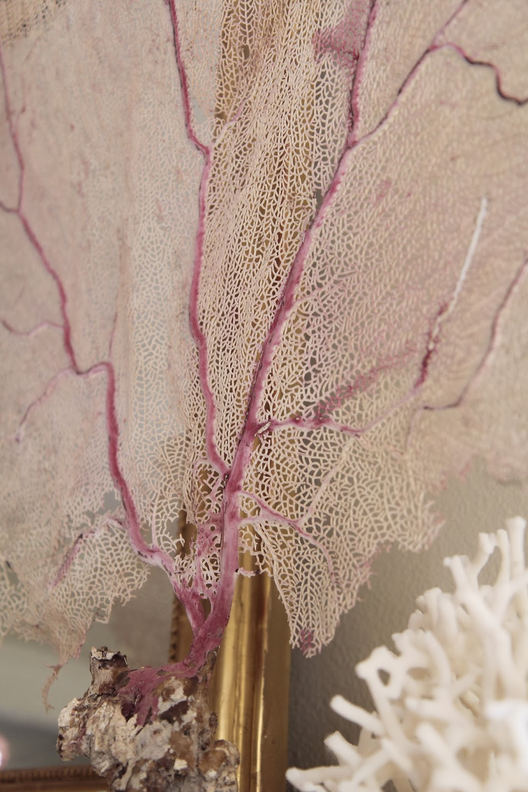 Pink Seafan Coral on Mantle: Nature's Sculptures
