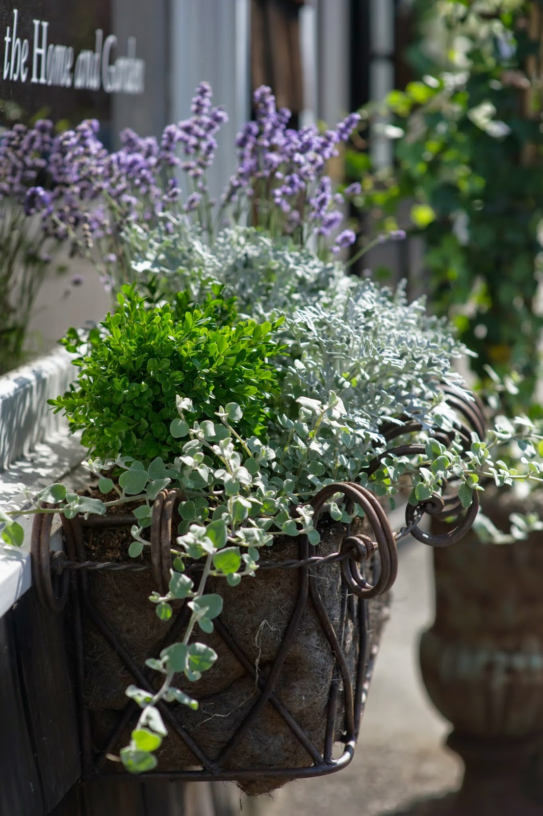 les fleurs : leah haydock photography : wire window box : european planter : french lavender, english boxwood, licorice & dusty miller