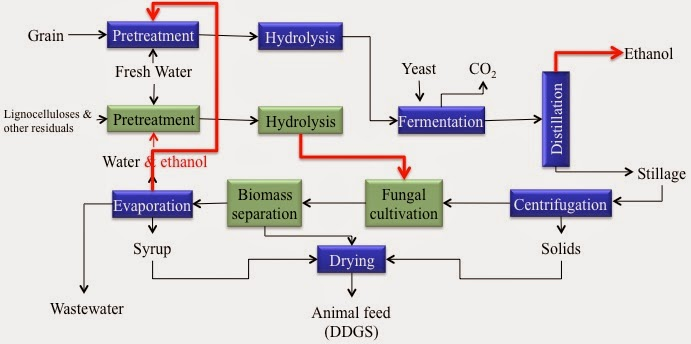 thesis corn ethanol Ii abstract dried distillers grains with solubles (ddgs) are a byproduct of the ethanol industry that may be cheaper than corn and nearly equal to corn in energy content.