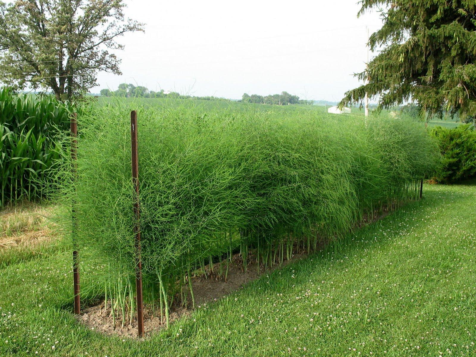 how to stop weeds growing in garden beds