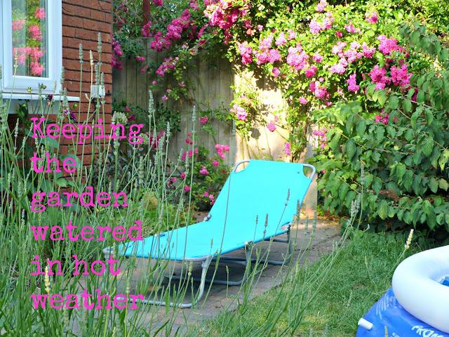Watering the garden in hot weather tips
